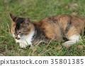 流浪貓 貓咪 貓 35801385