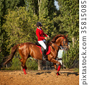 Jockey riding a horse gait 35815085