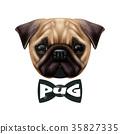 pug, dog, sketch 35827335