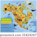 North, America, flora 35829267