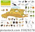 North America flora 35829278