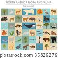 North, America, flora 35829279