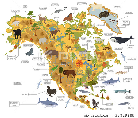 North America flora and fauna map, flat elements 35829289