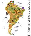 South, America, animal 35829293