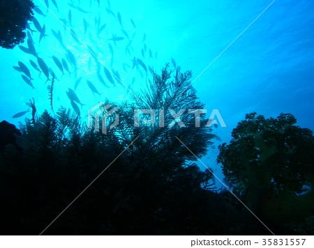 웅대 한 바다 35831557