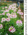 Flower Garden 35831720