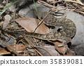 生態 自然生態 自然 35839081