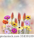 Variety of colorful flowers 35839109