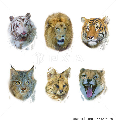 Wild Mammals digital painting 35839176