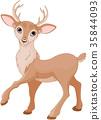 Cute Deer 35844093