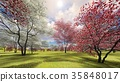 Flowering dogwood trees in orchard in spring time 35848017