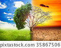 Environmental concepts, Live and dead big tree. 35867506