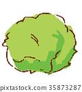 야채 상추 35873287