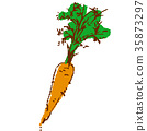 蔬菜 植物 植物學 35873297