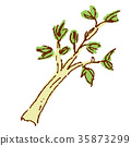 vegetables vegetable botanic 35873299