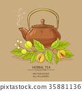 herb, nutmeg, vector 35881136
