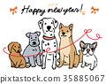 สุนัข,สุนัช,หมาชิบะ 35885067