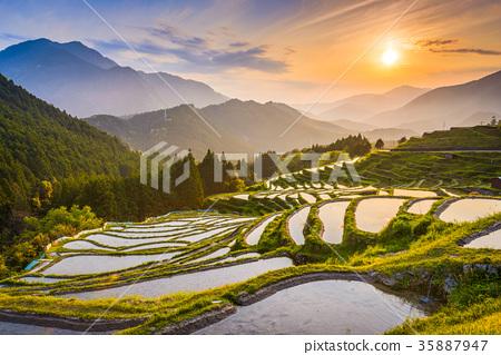 Kumano Japan Rice Terraces 35887947