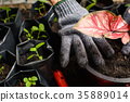 Tools on planting a black tree on the ground 35889014