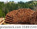 木材背景 木材 木頭 35891540
