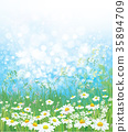 chamomile, flower, background 35894709