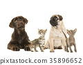 Dogs and kittens looking up 35896652