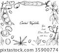 Hand Drawn of Podded Vegetables Frame 35900774