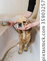 Dog is taking a shower at home 35903257