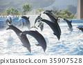 海豚 海豚表演 跳 35907528