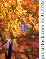 단풍, 가을, 단풍 나무 35912292