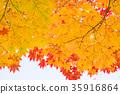 ต้นเมเปิล,ต้นออทัม,ท้องฟ้า 35916864