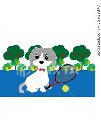 개, 강아지, 테니스 35919347