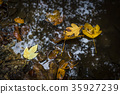 autumn, puddle, water 35927239