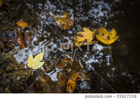Autumn leaves in warm colors 35927239