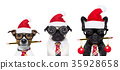dog office workers on christmas holidays 35928658