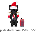dog office worker on christmas holidays 35928727