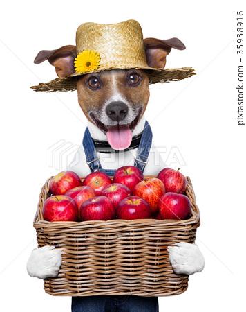 farmer dog 35938916