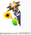 agriculture, animal, banner 35938925