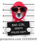 mugshot lady dog 35938949