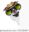 safari dog 35938997