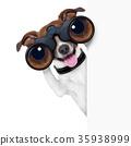 binoculars  dog 35938999