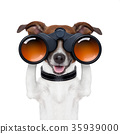 binoculars  searching looking observing  dog 35939000