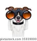 binoculars  searching looking observing  dog 35939000