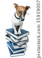 dog book stack 35939007