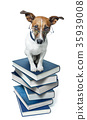 dog book stack 35939008