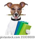 school dog 35939009