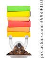 smart dog 35939010