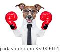 boxing dog 35939014