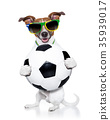 brazil  soccer  dog 35939017