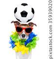 brazil funny soccer dog 35939020